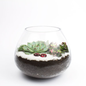The Dollop DIY succulent terrarium kit by Juicykits.com