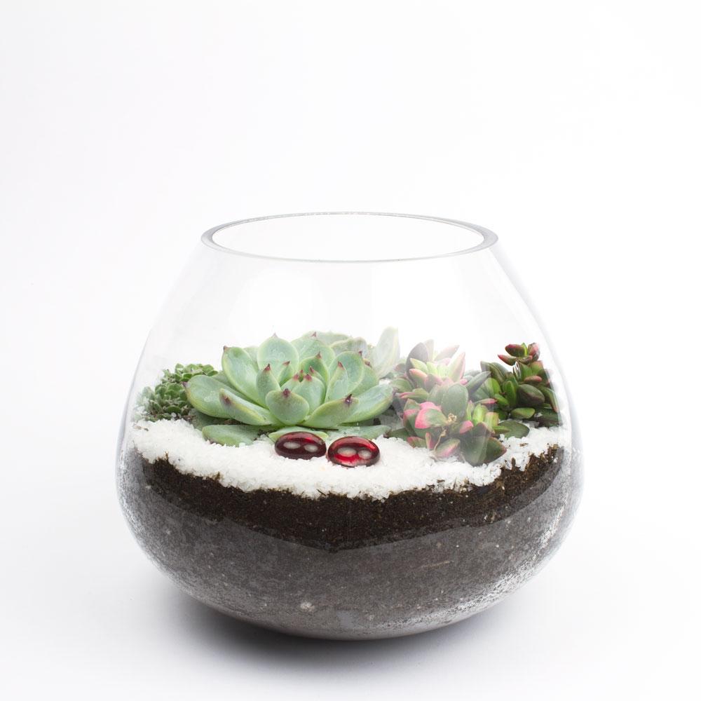 The Dollop DIY Succulent Terrarium Kit | Juicykits.com