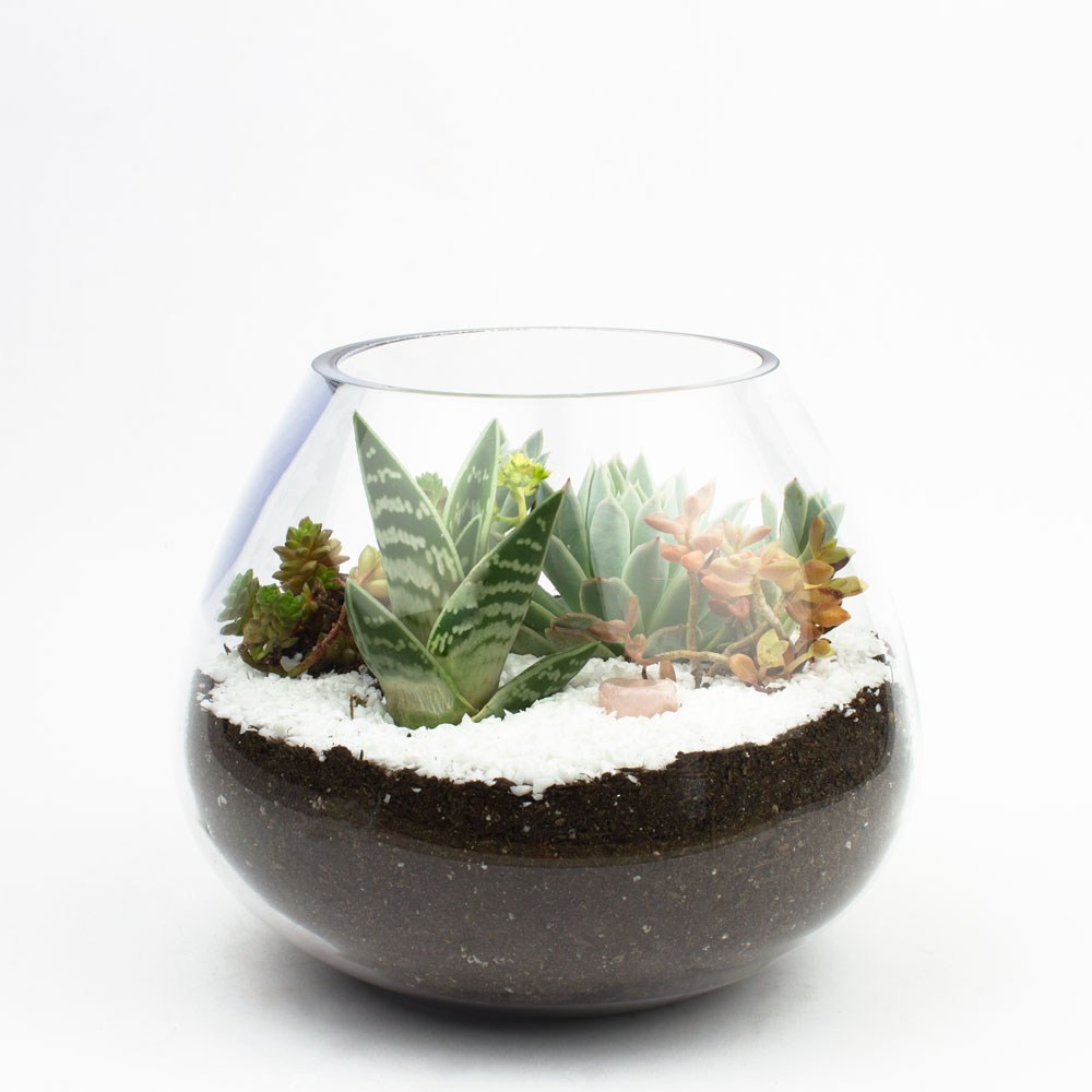 Diy Terrarium Kit All About Diy Ideas