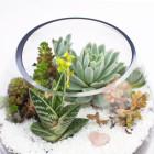 Closeup of The Dollop DIY succulent terrarium kit by Juicykits.com