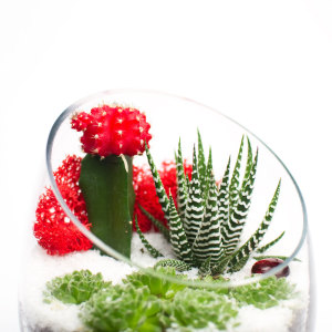 Closeup of Limited Edition Christmas or Winter Holiday DIY Terrarium Kit by Juicykits.com