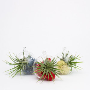 Juicy Froots air plant hanging terrarium ornaments