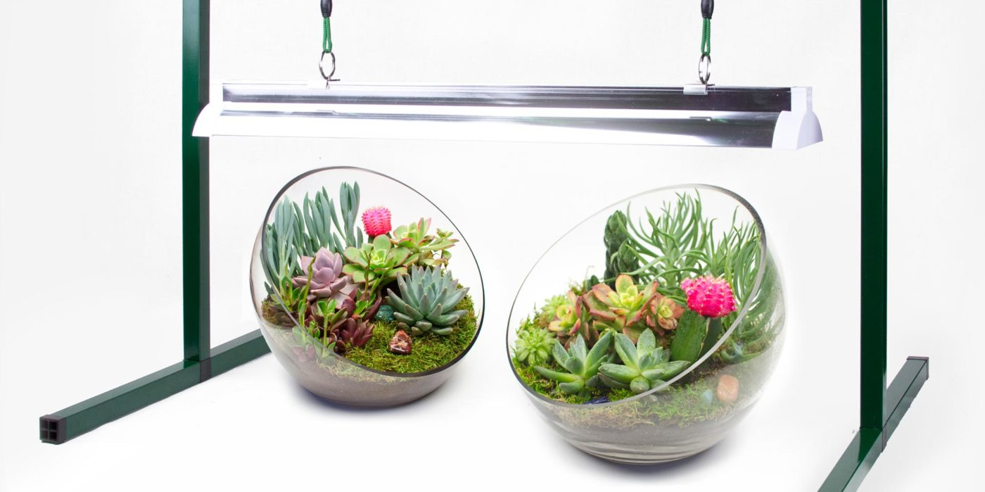 Grow Light Basics Artificial Lighting For Succulents Cacti