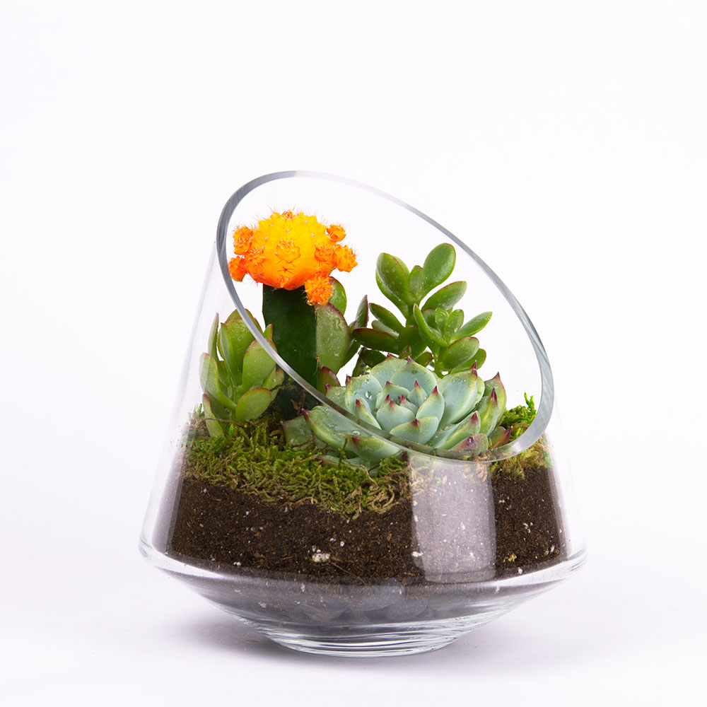 The Sidecar DIY terrarium kit with 3 succulents and cactus