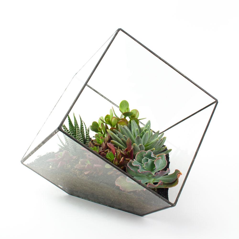 the rubix welded metal glass cube terrarium. Black Bedroom Furniture Sets. Home Design Ideas