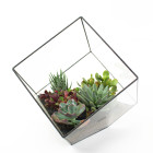 The Rubix glass and welded lead cube terrarium DIY kit from Juicykits.com
