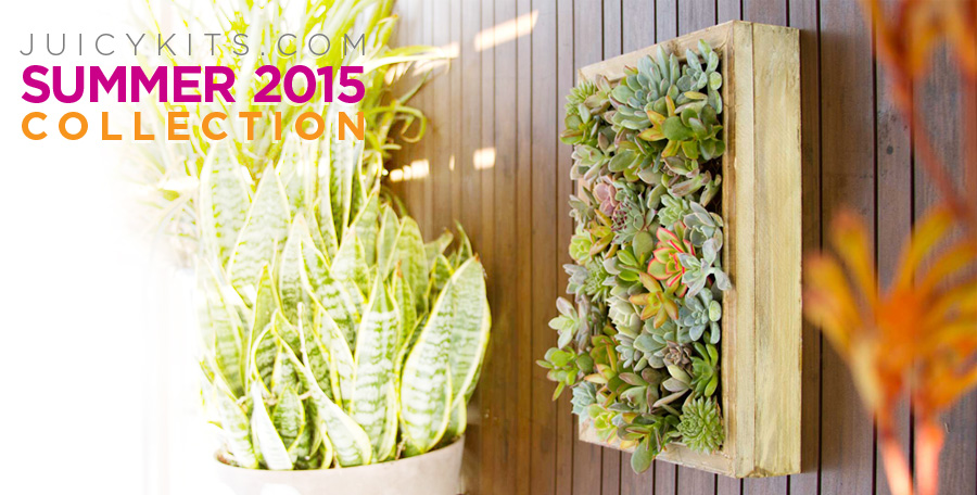 Juicykits.com Summer 2015 DIY Terrarium Collection