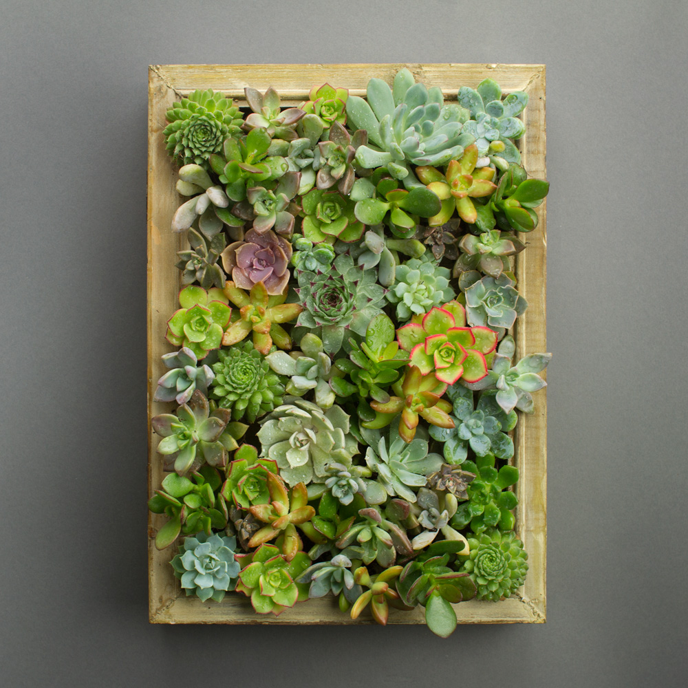 easy diy succulent living picture frame kit juicykitscom