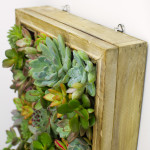 Hanging Succulent Living Picture Frame DIY Kit by Juicykits.com
