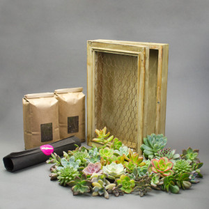 Materials for Succulent Living Picture Frame DIY Kit by Juicykits.com