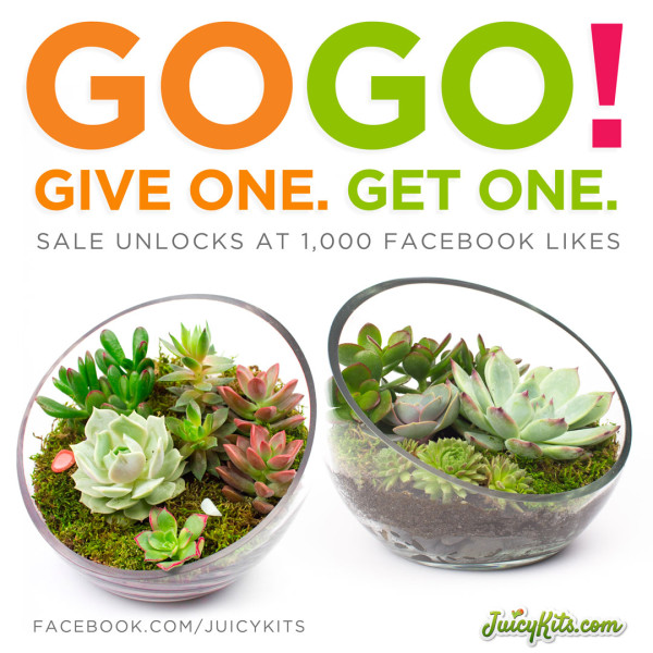 Give a terrarium kit and get one free at Juicykits.com