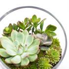 The Egg DIY Succulent Terrarium Kit