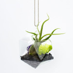The D20, 20-sided geometric glass terrarium with tillandsia air plant