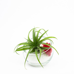 Baby Egg Air Plant Terrarium with White Sand