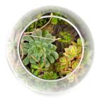 Top View of Big Ol' Dollop DIY succulent terrarium kit by Juicykits.com