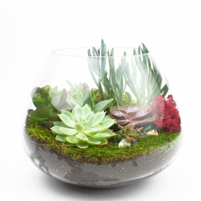 Beautiful Diy Terrarium Kits And Succulents Juicykits Com