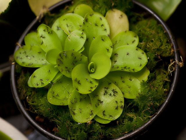 Pests In Your Succulents Here S What You Need To Know Juicykits Com
