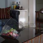 Big Ol' Rubix geometric glass DIY terrarium with succulents in mid-century modern lounge