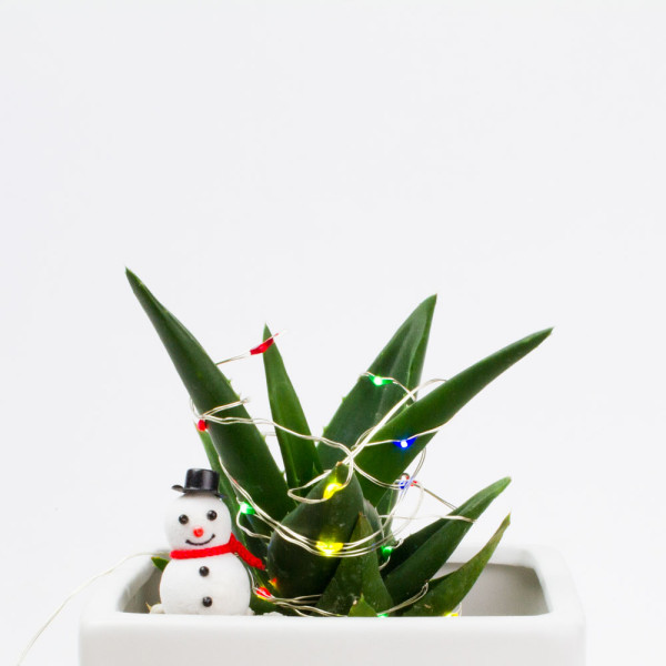 Juicykits Accessories for Christmas Terrarium Scene, Succulent Christmas Lights and Snowman