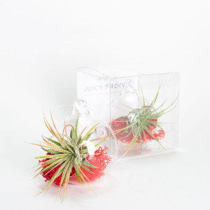 Juicy Froots Singles: individually packaged mini hanging air plant terrarium