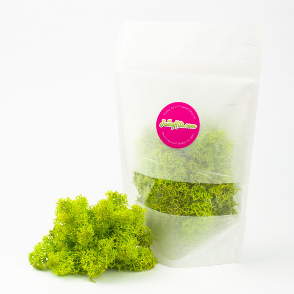 Colorful preserved reindeer moss from Juicykits.com