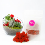 Colorful reindeer moss makes a great terrarium decoration