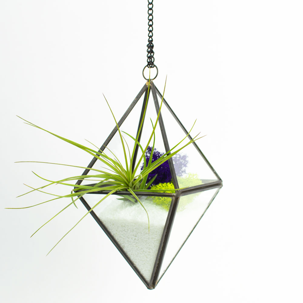 Air Plant Terrarium The Stella Hanging Air Plant Diy Terrarium Juicykitscom