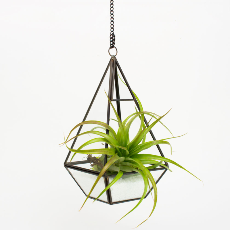 Air Plants Kits