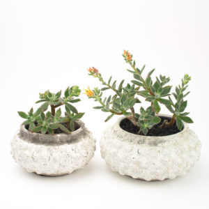 2 Sizes of Bonsai Bodhi DIY succulent planter with plush plant echeveria