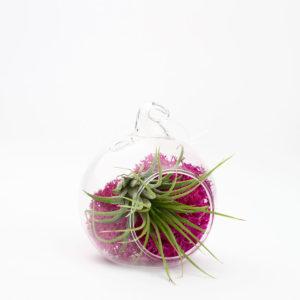 Juicy Froots terrariums now in pink!