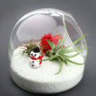 The Snowball Christmas and Holiday Terrarium with Air Plants