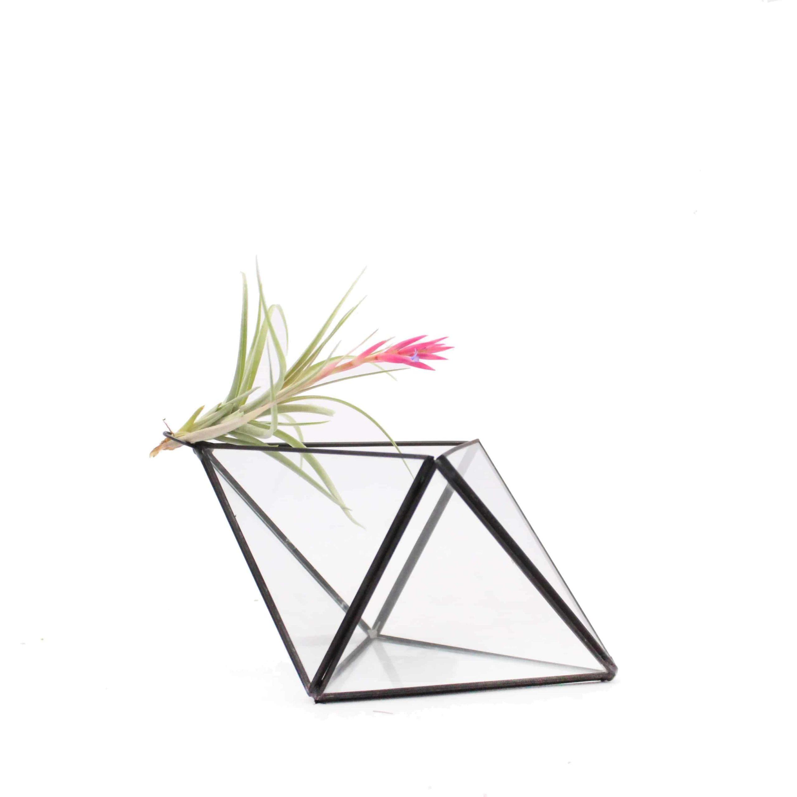 Geometric Glass Terrarium Standing Diamond Black Frame Juicykits Com