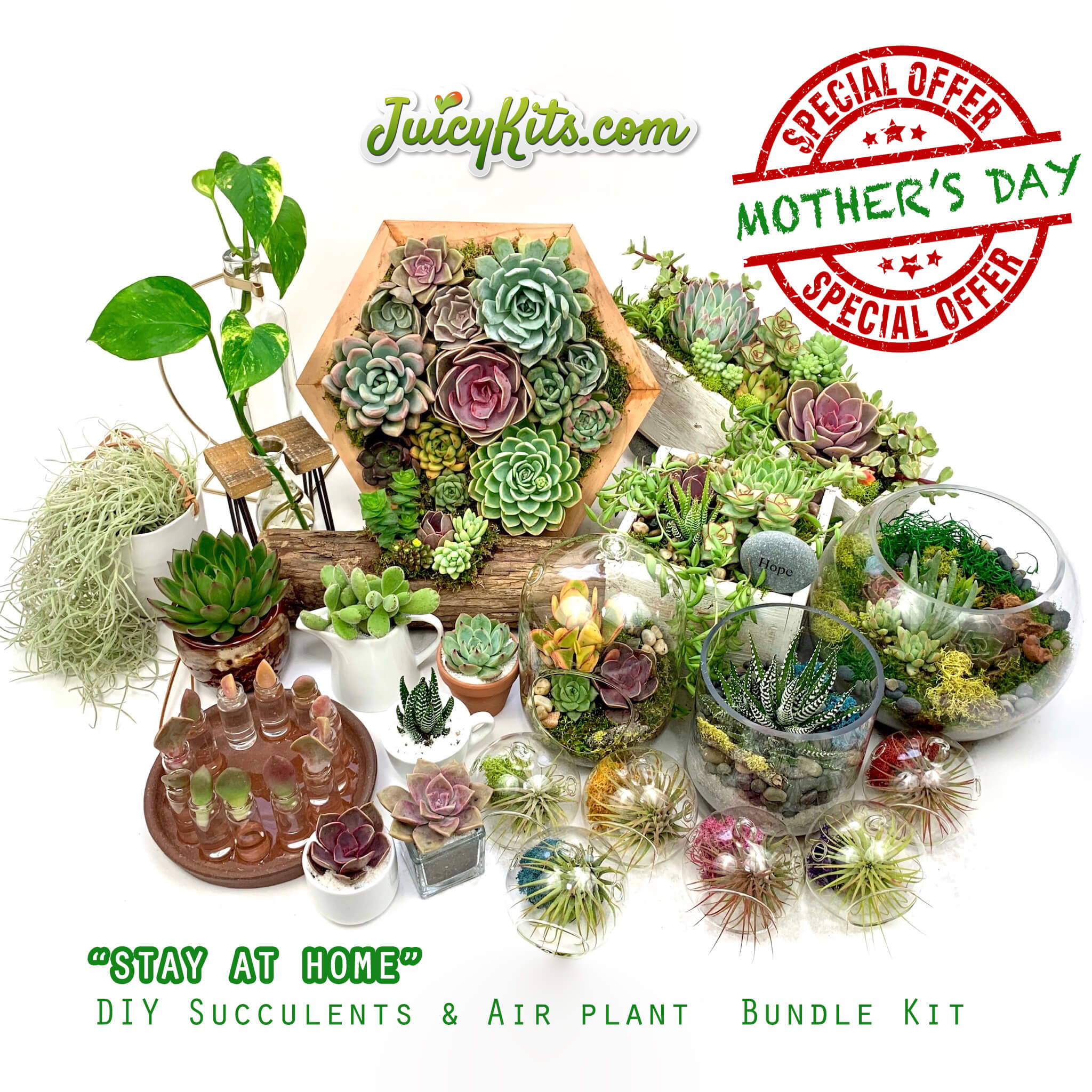 Stay At Home Diy Succulent Air Plant Bundle Kit Juicykits Com