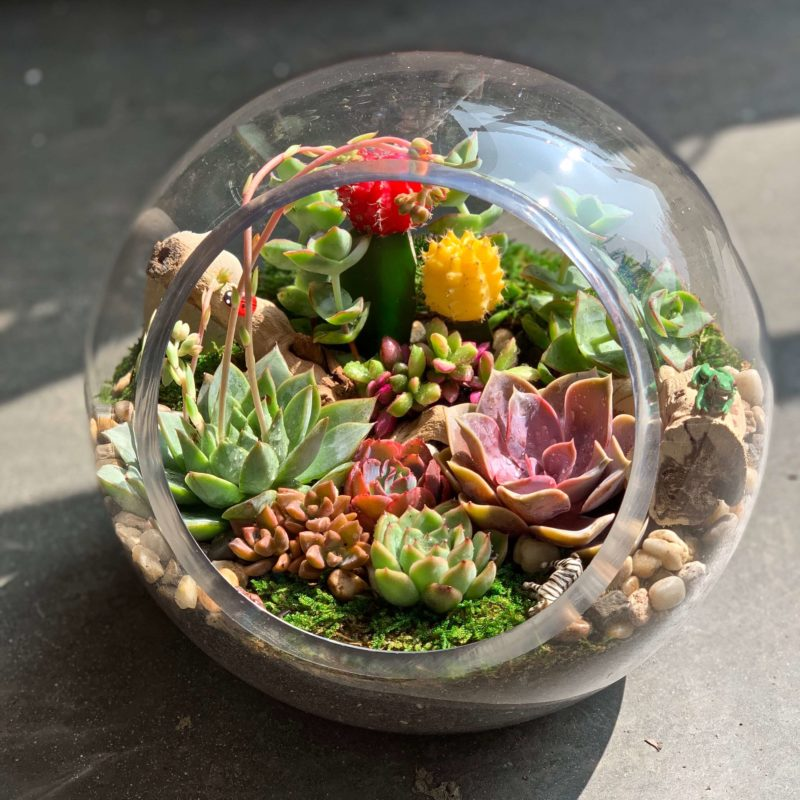 Popular DIY Terrarium Kits